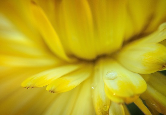 Yellow  by abhijit