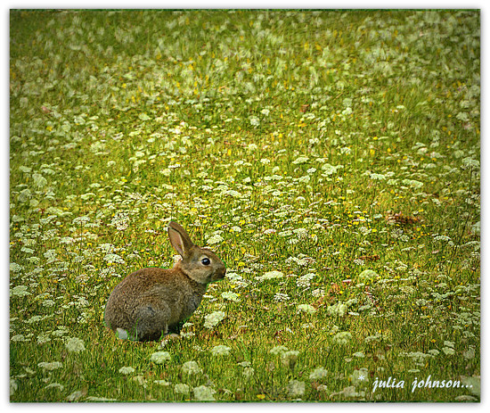 Peter Rabbit... by julzmaioro