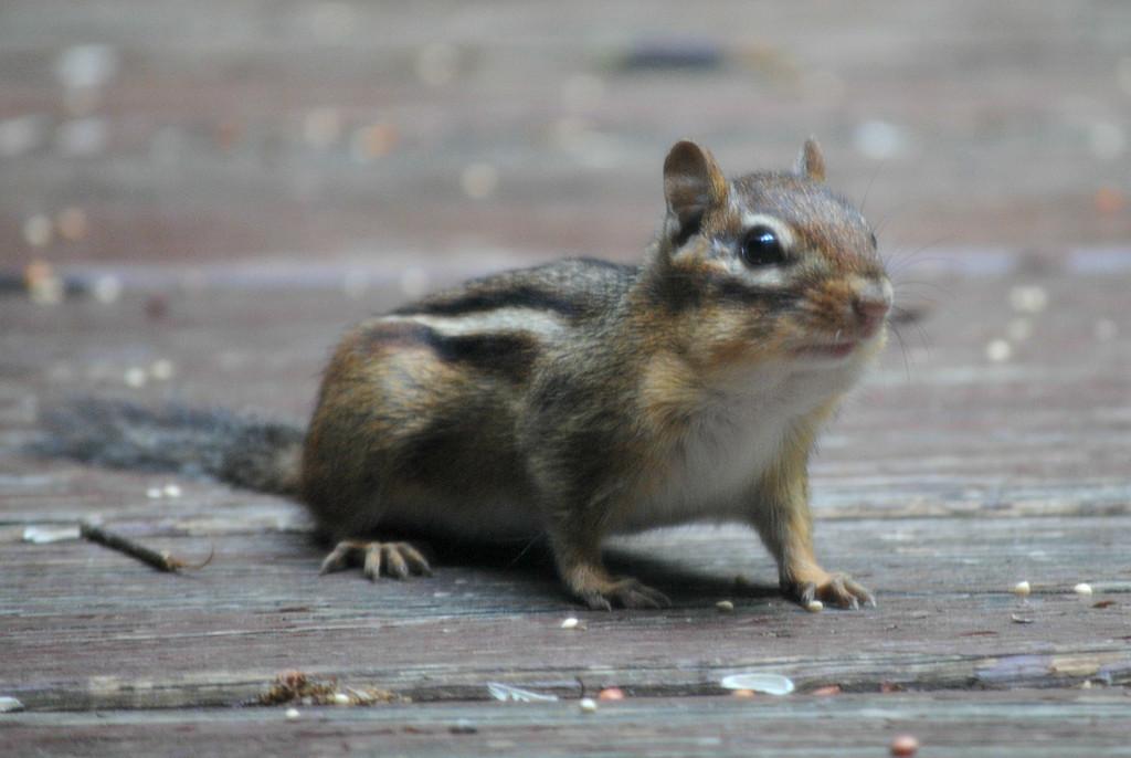 Pardon Me Do You Have Any Gray Poupon? by alophoto
