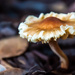 Mushrooms by danette