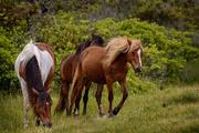 2nd Jun 2017 - Wild Horse Stallion Getting Wild Eyed