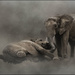 Elephants playing 2  by claudiet