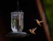 15th Jun 2017 - Two Hummers At the Feeder