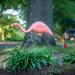 Stalking the Plastic Flamingo
