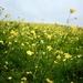 167/365 - Cross the meadow, seek your dreams.
