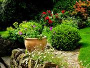 16th Jun 2017 - A busy day in the garden...