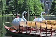 14th Jun 2017 - Swan Boats