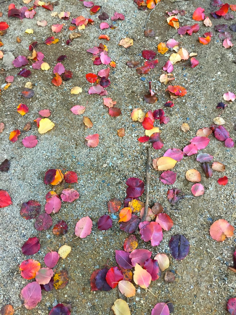 Autumn leaves by kjarn