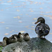 Ducks at the frog pond by novab