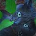 Moki In The Jungle by joysfocus