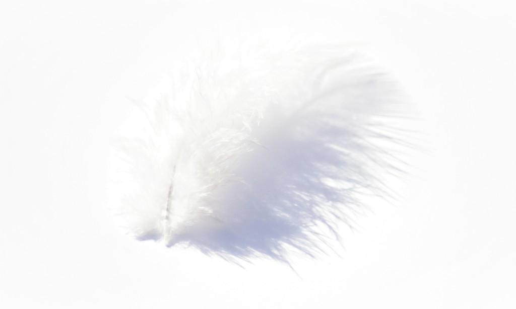 White Feather  by 30pics4jackiesdiamond