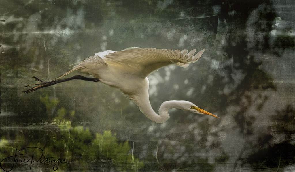 Flying White Egret with Textures by jgpittenger