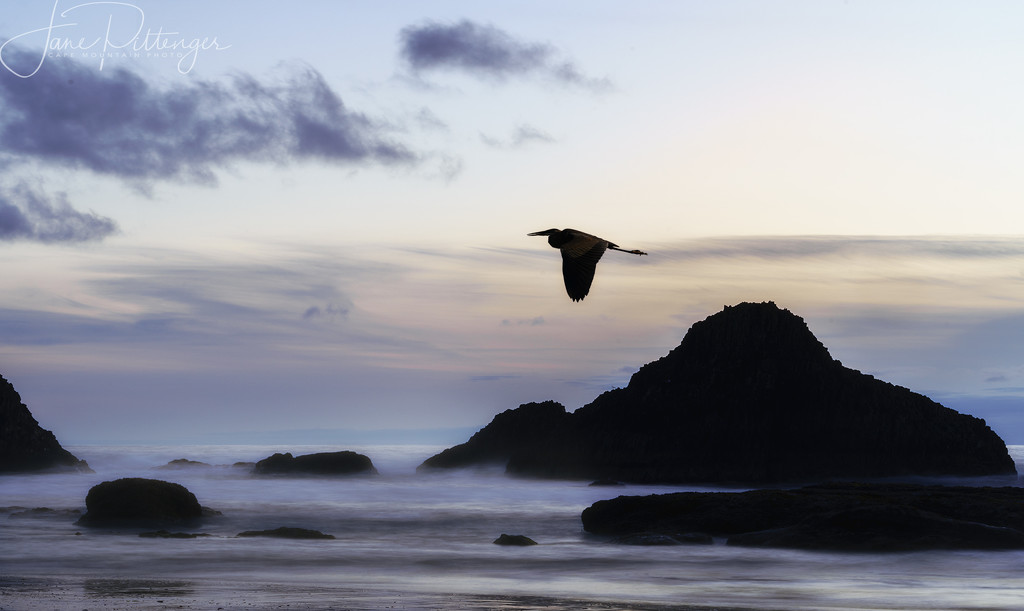 Seal Rock Quietness After the Sun Goes Down with Heron by jgpittenger