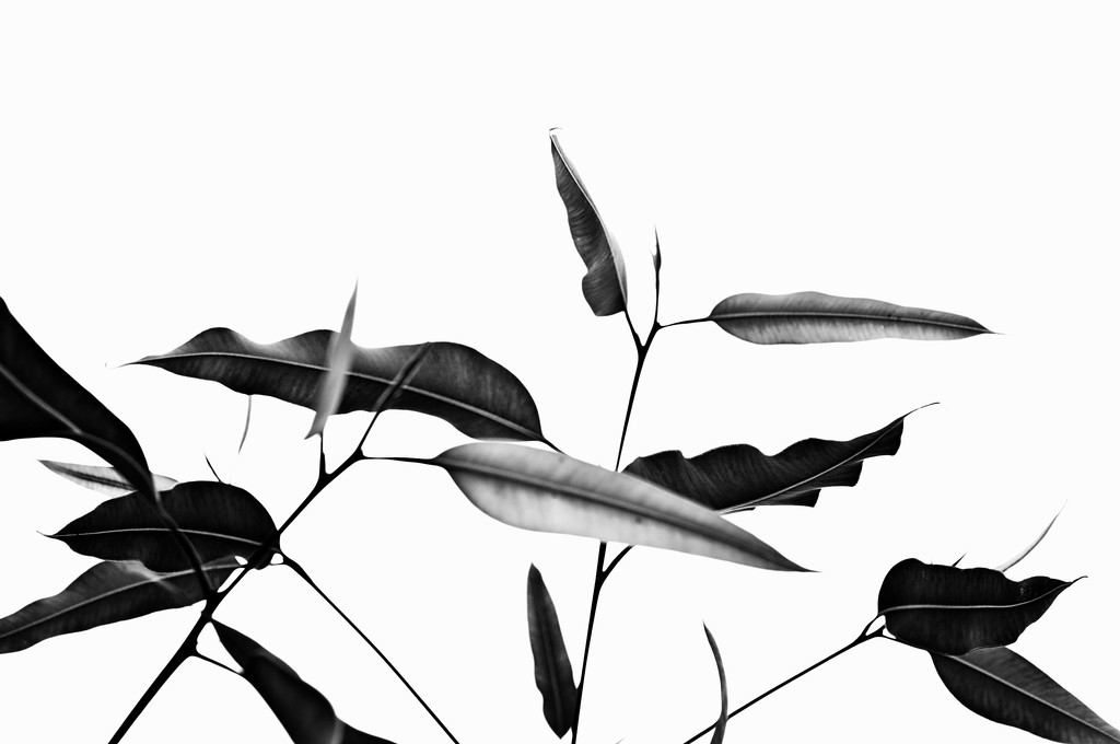 leaves of green in b&w by annied
