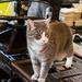 Ella the printing press cat