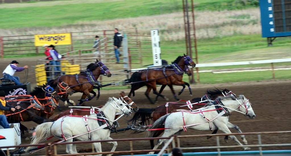 Chuckwagon Races by jayberg