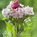 Dance bouquet