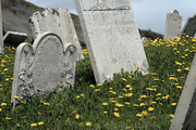 14th Jun 2017 - Lying Beneath the Daisies (Unless you've been Laid to Rest in Newfoundland)