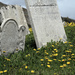 Lying Beneath the Daisies (Unless you've been Laid to Rest in Newfoundland)