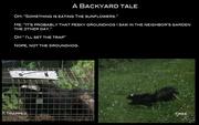 18th Jun 2017 - A Backyard Tale