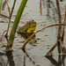 30 Day Wild Frog by farmreporter