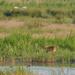 Wildlife Spotter