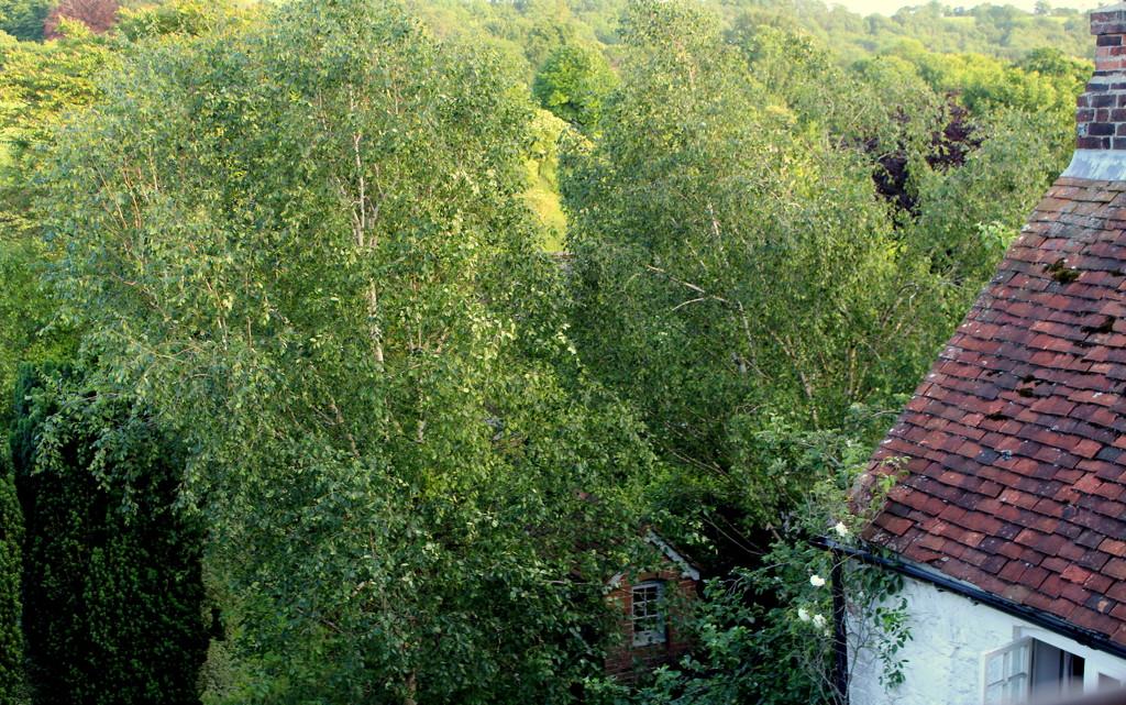 30 Days Wild - Day 9: Tree canopy by boxplayer