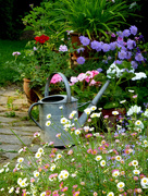 20th Jun 2017 - I must remember to water the flowers....
