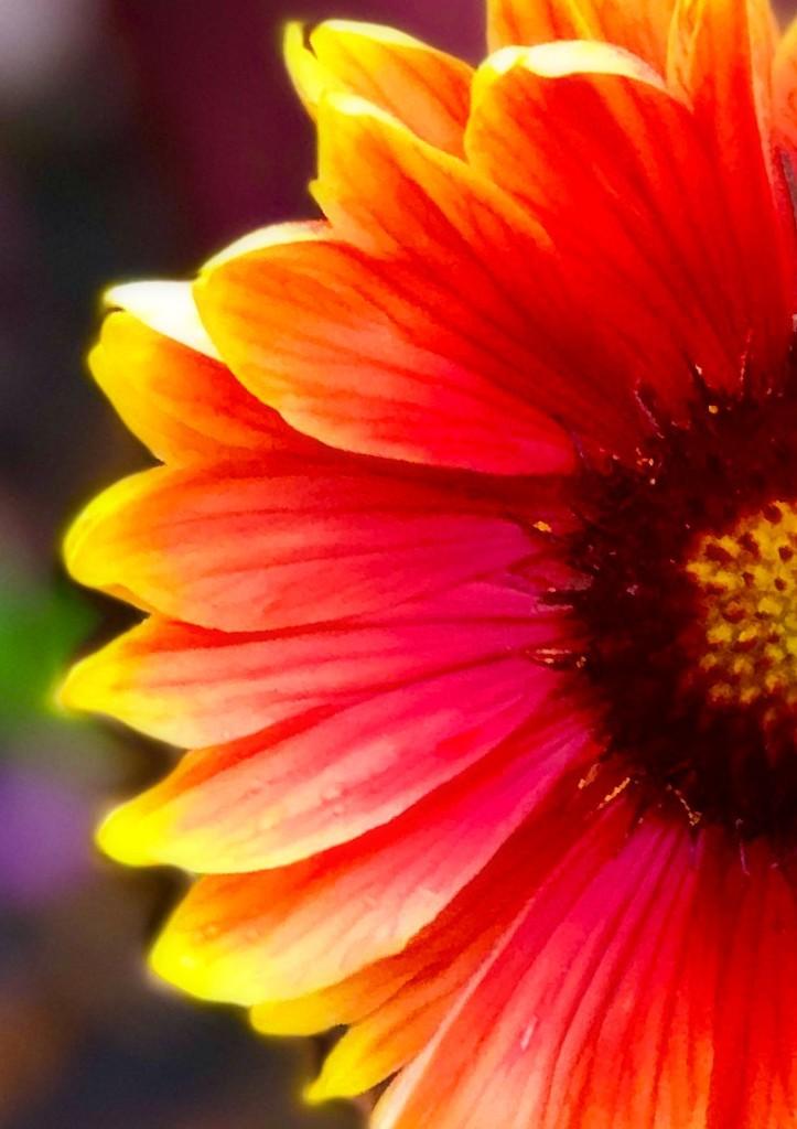 Summer Soltice by gardenfolk