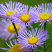 Spikey Petals by seattlite