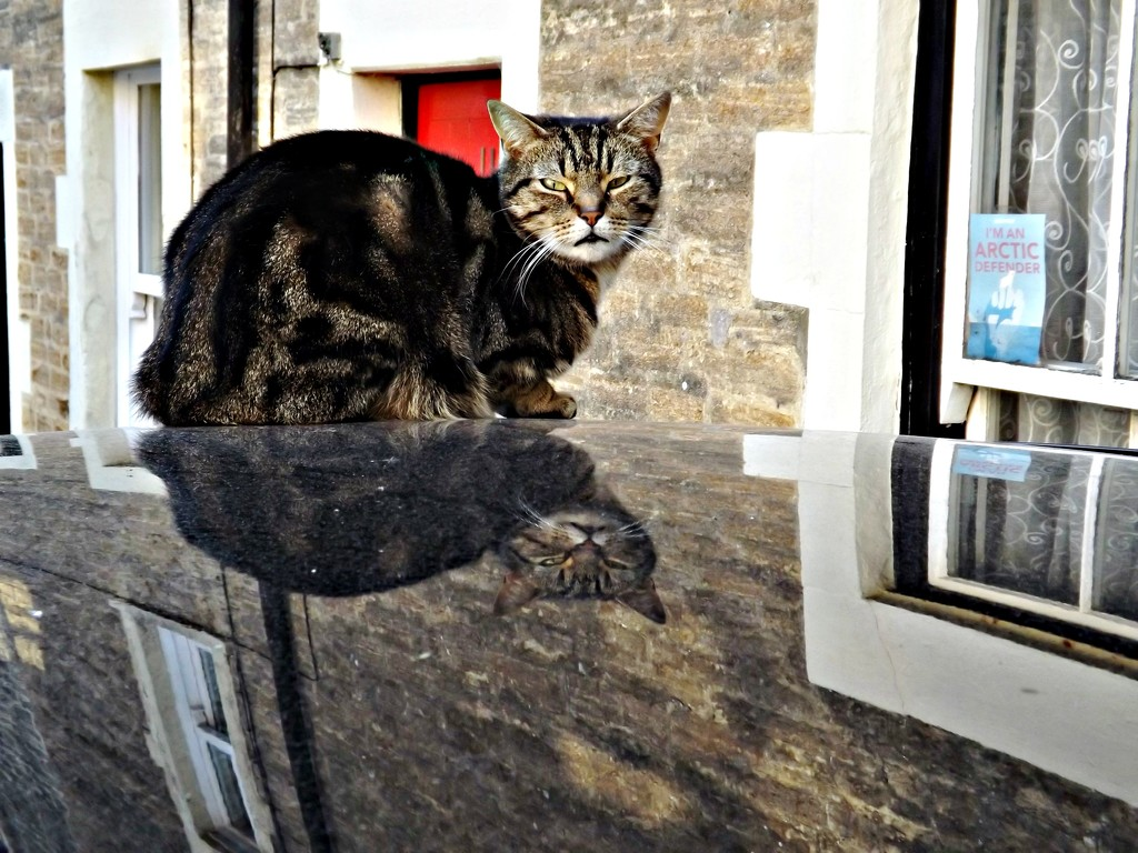 Reflections #3 - Cat on a (very) hot tin roof by ajisaac