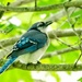 Blue Jay by pamknowler