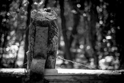21st Jun 2017 - Occasional Fence Post 21