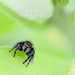 An incy wincy spider went up the milkweed leaf!