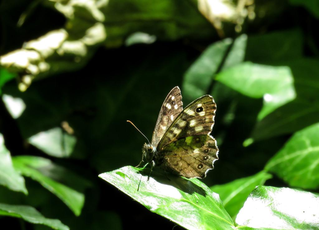 Little butterfly by m2016