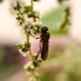 Blurry bug by m2016