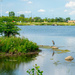 Great Blue Heron Landscape