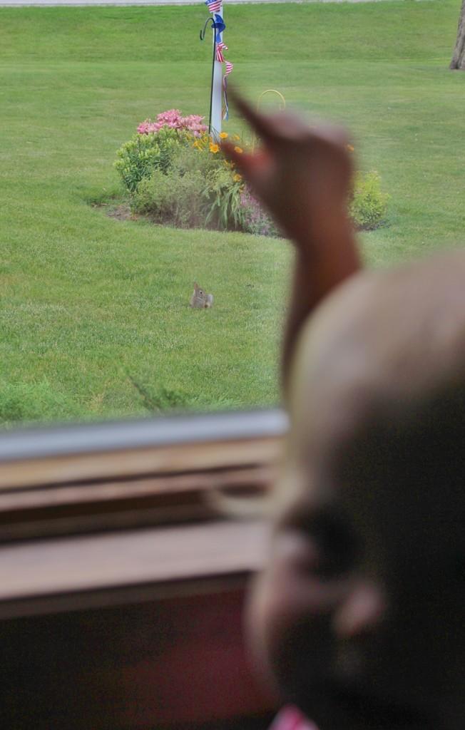 """A Baby Bunny!"" by bjchipman"