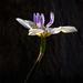 Simple Flora