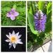 today's wildflowers