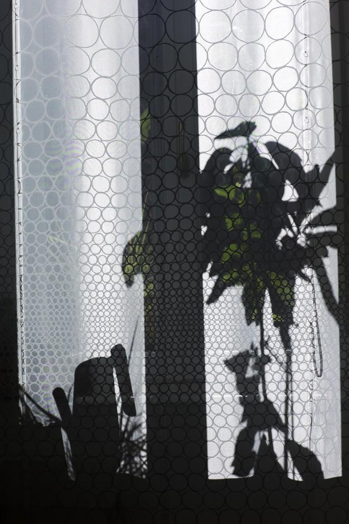 6.23 Chinese shadows by domenicododaro