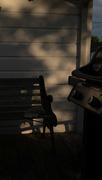 24th Jun 2017 - Sunset and shadows