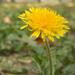 Lonely wild flower