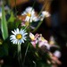 Mrs S's Kitchen Table Wild Flowers - Lensbaby Style... by vignouse