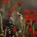 matchstick lichen