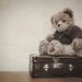 Teddy by salza