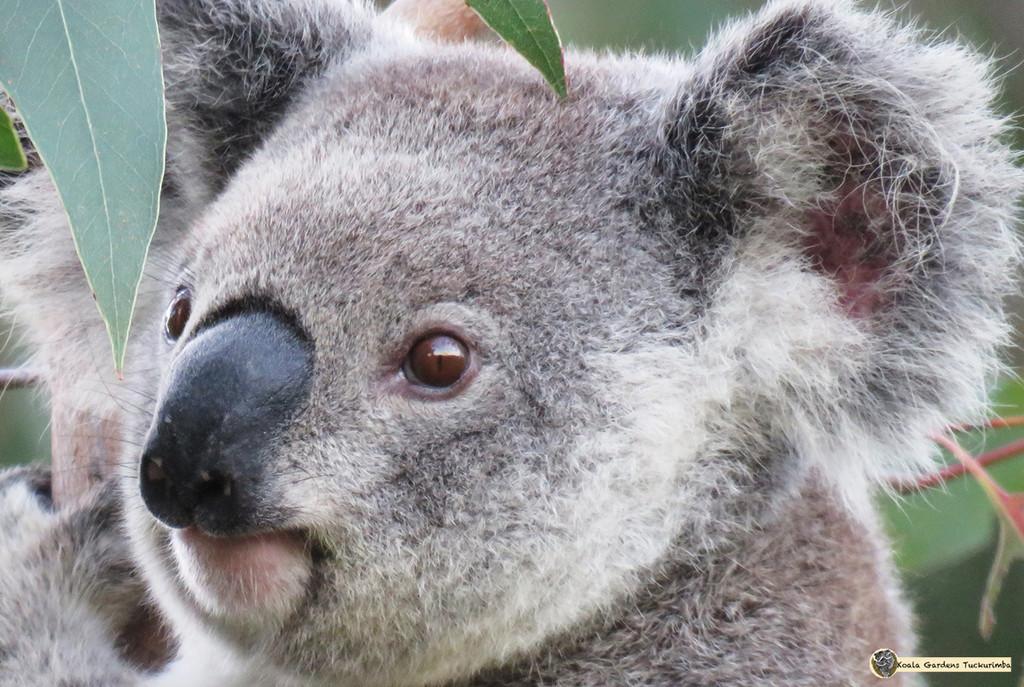 bright eyes by koalagardens