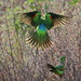 Red-Winged Parrot by terryliv