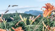 26th Jun 2017 - A view of Grandfather Mountain