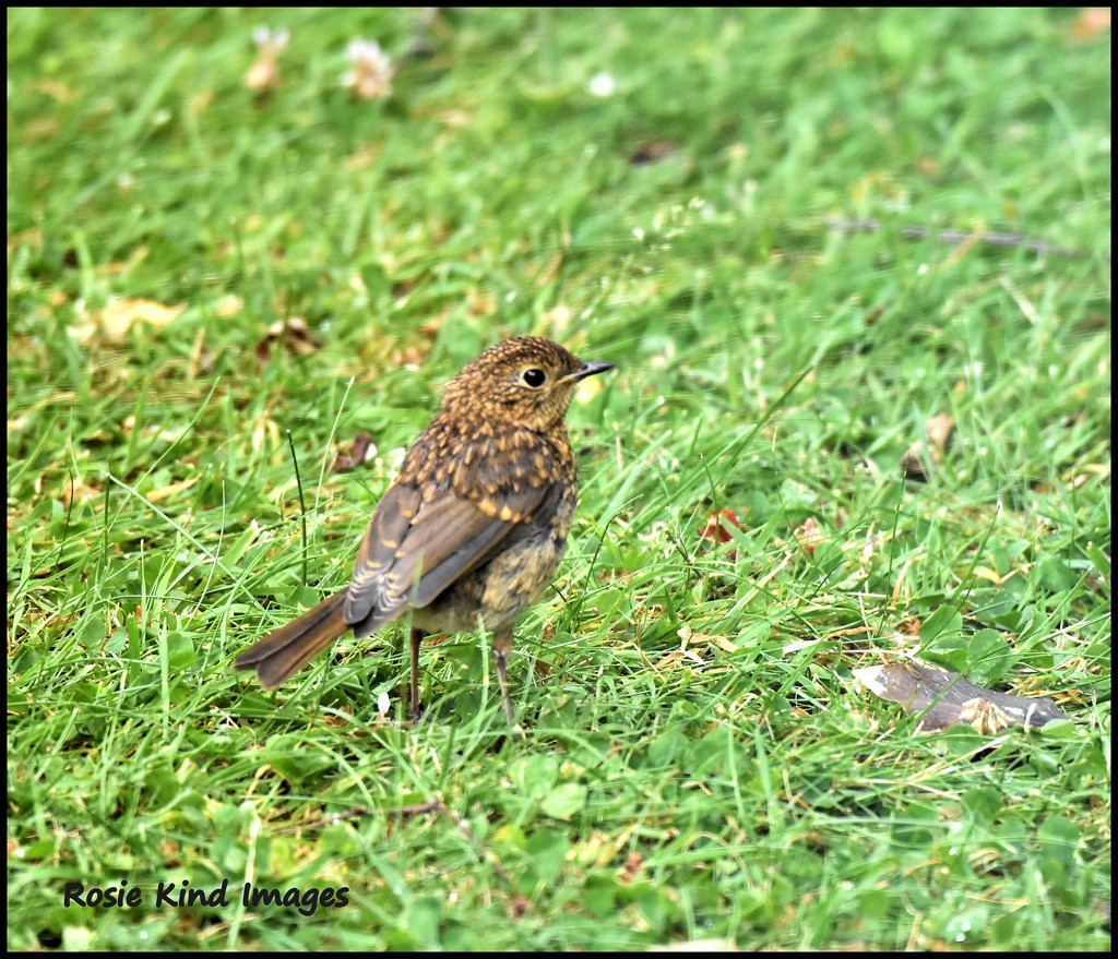 Baby robin is doing well by rosiekind